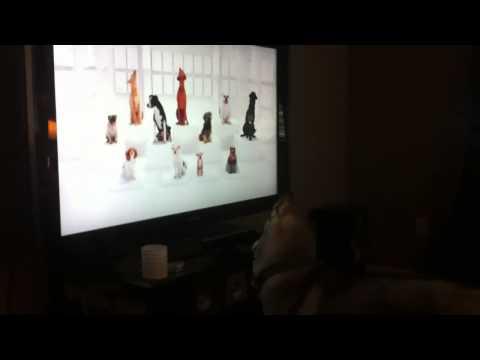 Akira watching dog tv