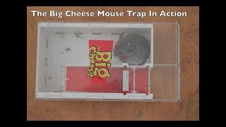 The BIG CHEESE Live Catch Mouse Trap In Action With Motion Cameras