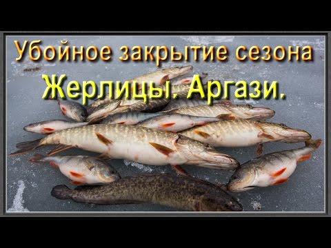 это была только что пойманная рыба судаки и окуни сиги и налимы