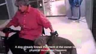4. Service Dog Training (abuse) .flv
