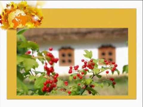 Символи україни в картинках рослини