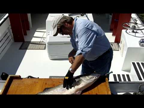 How to clean a fish the Bill Fish Way