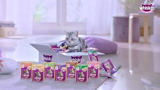 Perisa mana kucing paling gemari?...