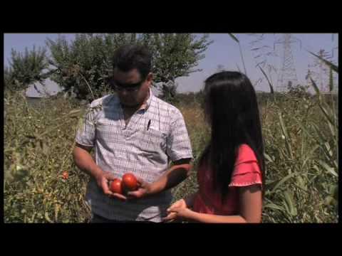 Peach Farm Organic