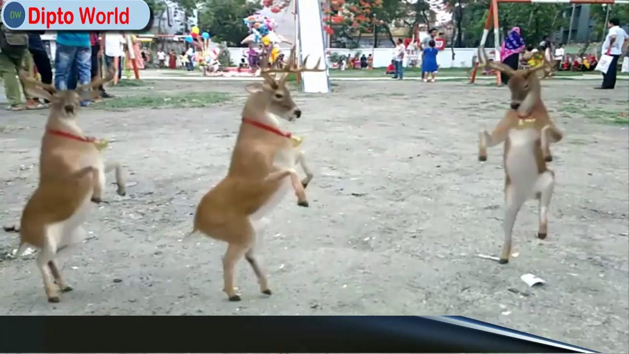 Funny Animals Dancing To Music Beautiful Animal Dance Dancing Deer Animals Dancing