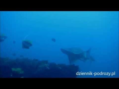 Bowmouth Guitar Shark in Zavora, Mozambique