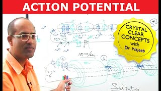 Action Potential in the Neuron - Physiology