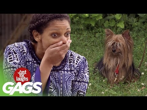 Shredding Dogs in PUBLIC PRANK - Just For Laughs Gags