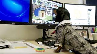 2017 Funny Office Christmas Video - Señor the Dachshund - Spawforths' Christmas Helper