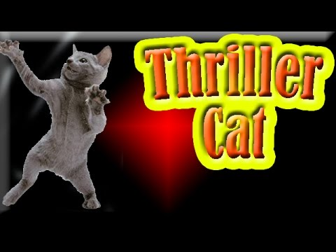 Thriller Cat: Cat Dancing to Smooth Criminal by Michael Jackson
