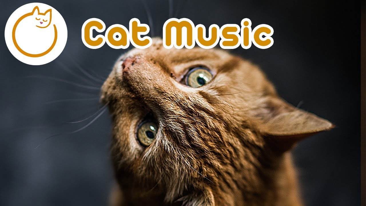 EXTENDED Cat Music - 7 Hours of the Ultimate Cat relaxation Songs