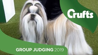 Utility Group Judging and Presentation | Crufts 2019