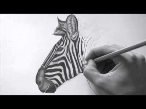 how-to-draw-a-realistic-zebra