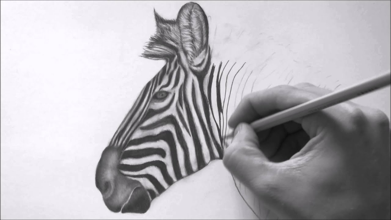 how to draw a realistic zebra youtube