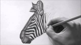 How to Draw A Realistic Zebra