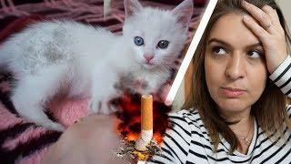 angezündete Babykatze adoptiert. Wie kann man nur so grausam sein ? / nurEbru