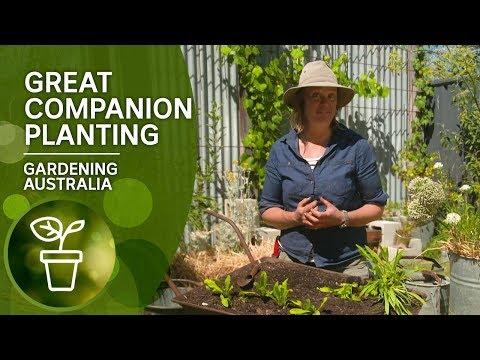Great Companion Plants