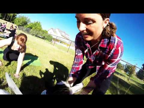 Goat Yoga from the Goats perspective! GoatPro GoPro