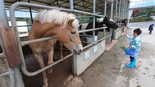 [한터조랑말농장]아이들이 좋아하는 동물먹이주기 체험