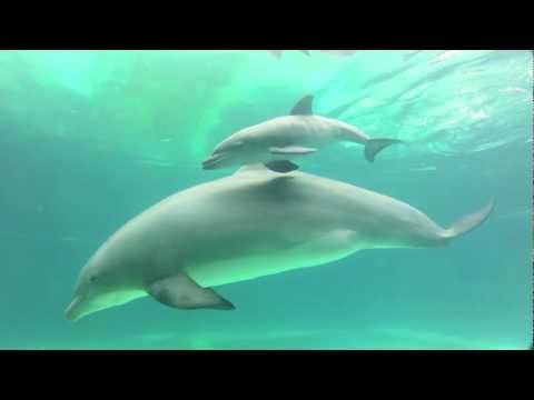 Baby dolphin born at Discovery Cove in Orlando, Florida