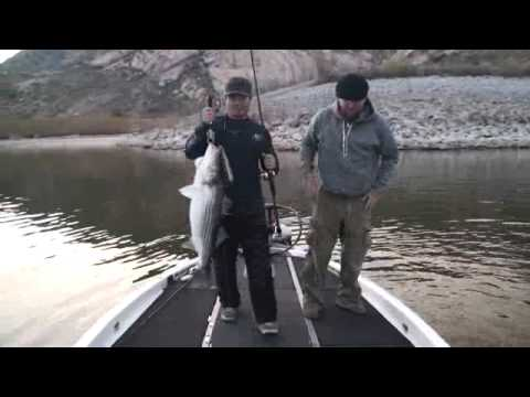 Giant 21lb Striper Caught At Lake Perris On NEW Musky Innovations Seducer