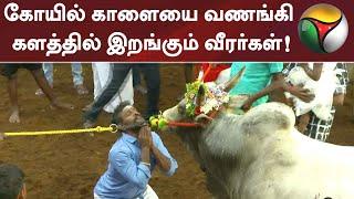 கோயில் காளையை வணங்கி களத்தில் இறங்கும் வீரர்கள்! | Jallikattu