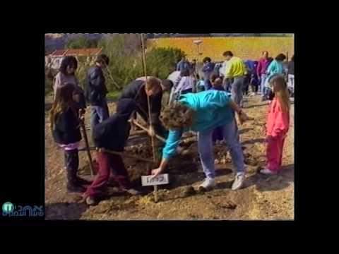 טו בשבט 1994 צילום ועריכה נגה בינשטוק