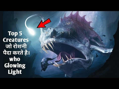 Top 5 Light Glowing Creatures || Facts And Science New Videos