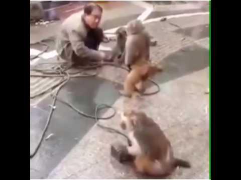 Maymunun İntikamı