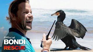 A Furry Friend Visits Bondi Beach