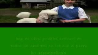 Poodle 101 (subtitulado Al Español)