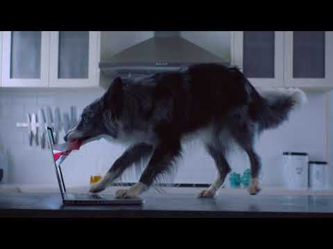 Pet Circle Ad 2018: All Your Pet Food & Supplies Online! [30S]