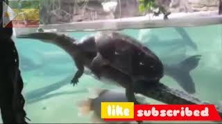 Amazing Funny \u0026 Cute Animals Compilation