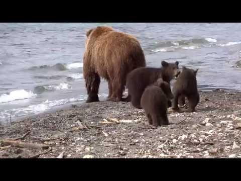 Bärenmutter mit drei