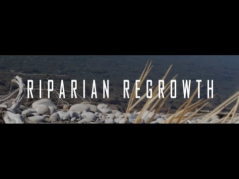 Greater Yellowstone Wolf Reintroduction: Riparian Regrowth (BTV documentary)