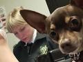 Как перевезти собаку в поезде: сколько стоит и какие документы нужны?
