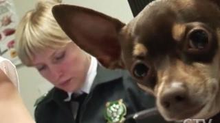 Как перевезти собаку в поезде: сколько стоит и какие документы нужны?(, 2017-02-02T13:17:41.000Z)