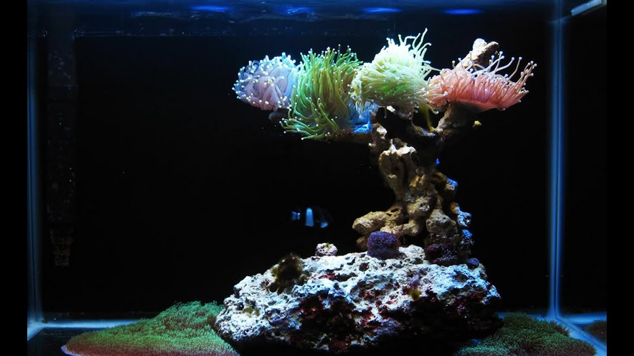 120g Amp 34g Saltwater Reef Nano Tank Youtube