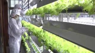 人工光源で無農薬野菜栽培 富士町の「元気村 thumbnail