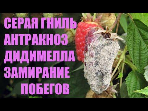 Болезни ежевики и малины. Фунгициды. Часть 1