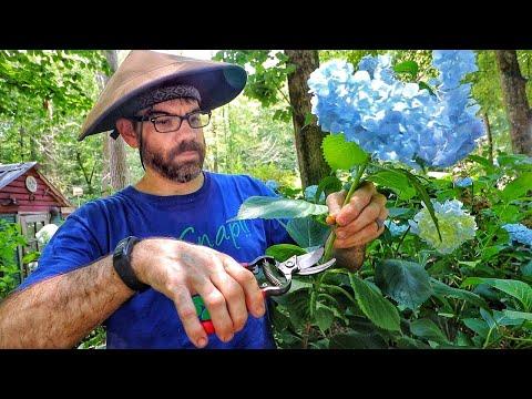 All About My Hydrangea Garden (Growing Hydrangeas 101)