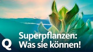 Superpflanzen: Die neue Waffe für den Umweltschutz | Quarks