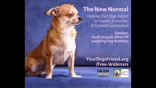 The New Normal – helping our dogs adjust to guests, activities & general commotion 9/11/21