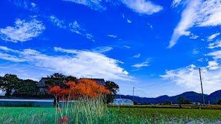 4K 京都亀岡・彼岸花の里 2018 京都ぶら歩き・散歩 散策 KYOTO WALKING