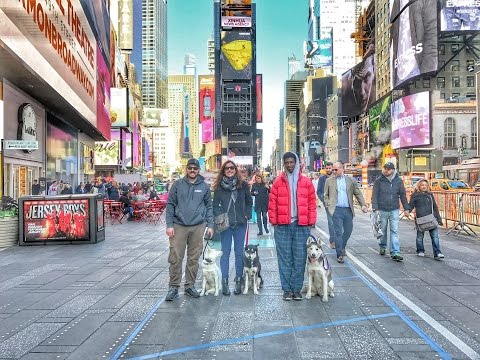 Long Island Dog Trainer: Husky, Ghost, Off Leash in NYC & DC  Best Dog Trainers in NY