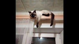 КОД ЖИЗНИ. Кошка Асура сказала мне спасибо