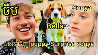ចឺមជូនទៅទិញឆ្កែ Surprise សន្យា - buy beagle puppy for sonya