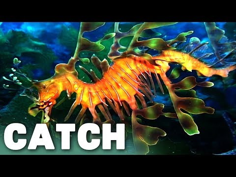 Secrets Of The Australian Ocean (Ocean Fish Documentary) | Catch