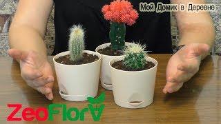 новые кактусы! Посадка в новый грунт для кактусов и суккулентов ZeoFlora