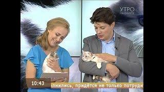 Необычные кошки: как живется коротколапым кошкам породы манчкин?